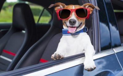 Come preparare il vostro animale domestico ad un lungo Viaggio